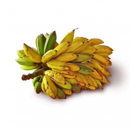 Banana-Rajapuri