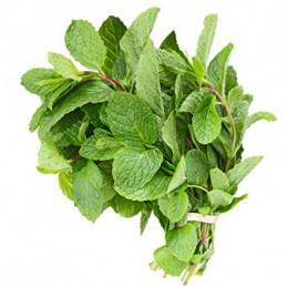 Pudina Leaves (mint)