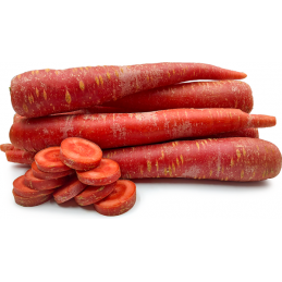 Carrot (Red)