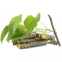 Giloy Sticks Plant
