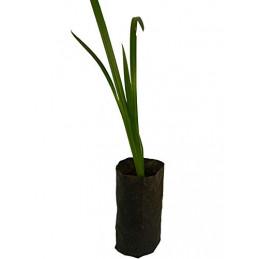 Vekhand Plant