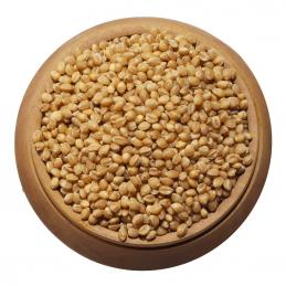Wheat - Paighambari / Jondhala