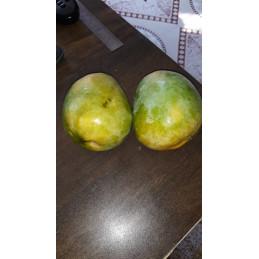 Mango (Gavran)