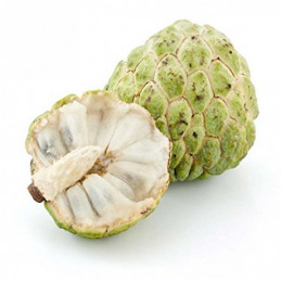 Custard Apple (small)